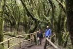 Thumbnail pair walking through Garajonay National Park, laurel forest, laurisilva, La Gomera, Canary Islands, Spain