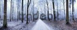 Thumbnail Panoramic view of a path leading through a forest covered in ice, Eichstaett, Bavaria, Germany, Europe