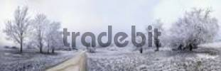 Thumbnail Path between frost-covered trees, Eichstaett, Bavaria, Germany, Europe