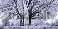 Thumbnail Benches under wintry linden trees, Eichstaett, Bavaria, Germany, Europe