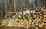 Thumbnail Woodpile in a forest, Alder Alnus and Ash Fraxinus logs