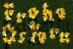 Thumbnail Frohe Ostern German for quotHappy Easterquot spelled out in yellow crocuses Crocus on grass