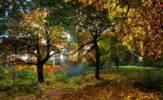 Thumbnail Path going through an autumn forest near Eichstaett, Bavaria, Germany, Europe