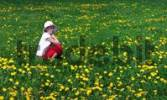 Thumbnail Girl wearing hat sitting on a lawn covered in dandelions
