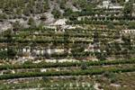 Thumbnail Olive trees, terraces, Troodos Mountains, Cyprus, Europe