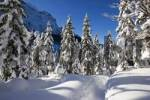 Thumbnail Snow-covered trees in a mountain forest, Mittenwald Forest, Bavaria, Germany, Europe