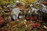 Thumbnail autumnal ground vegetation, Norway