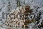 Thumbnail Frost-covered logs stacked along a forest path, Westerwald, Hesse, Germany, Europe