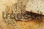 Thumbnail Wholegrain bread