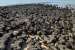 Thumbnail Stromatolites, Hamlin Pool Marine Nature Reserve, Shark Bay, Western Australia, Australia