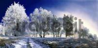 Thumbnail Panorama of frost-covered trees under a deep blue sky near Eichstaett, Pietenfeld, Bavaria, Germany, Europe