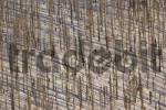 Thumbnail waldsterben forest dieback