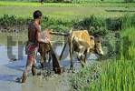 Thumbnail nepal people farm working buthan