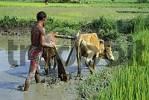 Thumbnail nepal people farm working buthan