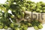 Thumbnail Basket of hops Humulus