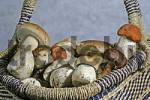 Thumbnail Fresh collected mushrooms in a basket