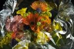 Thumbnail Bouquet of flowers wrapped in cellophane