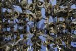 Thumbnail Dried fish hanging on a drying rack, Senja Peninsula, Norway, Europe