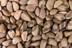 Thumbnail Brazil Nuts Bertholletia excelsa