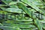 Thumbnail Green Beans Phaseolus vulgaris