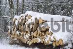 Thumbnail Stack of wood in snow covered forest Muehltal near Munich Germay