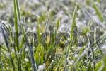 Thumbnail Grass covered in morning frost