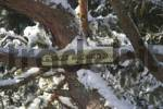 Thumbnail Sign to the Giesinger Waldhaus in the snow covered forest Perlacher Forst Munich Germany