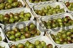 Thumbnail freshly picked gooseberries in baskets