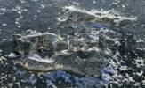 Thumbnail frozen ice on a lake