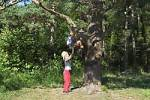 Thumbnail Six year old boy helping his older brother up a tree Perlacher Forest Munich Germany