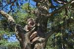 Thumbnail Eight year old boy sitting on a tree Perlacher Forest Munich Germany