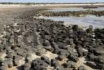 Thumbnail Stromatolite formations, Hamlin Pool Marine Nature Reserve, Western Australia, Australia