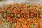 Thumbnail Paella served during fiesta, Altea la Vella, Alicante, Costa Blanca, Spain