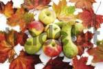 Thumbnail Apples and pears with colourful autumn leaves