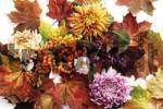 Thumbnail Firethorn berries, beautyberries and chrysanthemums with colourful autumn leaves