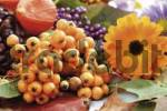 Thumbnail Autumn decoration: firethorn berries, beautyberries, Chinese lantern, pot marigold, colourful leaves
