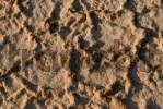 Thumbnail Texture, salt pan ground after a brief rainfall
