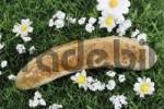 Thumbnail Bratwurst sausage laying in a flower meadow