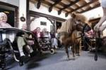 Thumbnail Residents visited by a pony at a nursing home