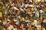 Thumbnail Autumncolours