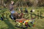 Thumbnail seven year old boy is pushing a wheel barrow with terra to plant flowers in spring