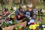 Thumbnail seven and five year old boys are planting flowers in spring