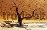 Thumbnail Death Vlei, Namibia