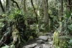 Thumbnail Rainforest, Mount Kinabalu, Sabah, Borneo, Malaysia, Southeast Asia