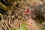 Thumbnail birds nest