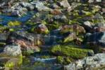 Thumbnail Moss-covered granite rocks in a streambed, Greenland