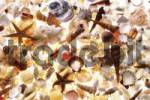 Thumbnail Assortment of shells, seashells, image-filling