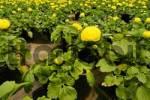 Thumbnail jung plaint in a gardening