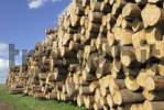 Thumbnail Stacked spruce trunks, logs, lumberyard near Viechtach, Bayerischer Wald, Bavarian Forest, Lower Bavaria, Germany