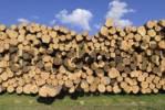 Thumbnail Stacked spruce trunks, logs near Viechtach, Bayerischer Wald, Bavarian Forest, Lower Bavaria, Germany